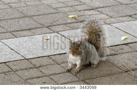 Squirrel Posing On Pavement