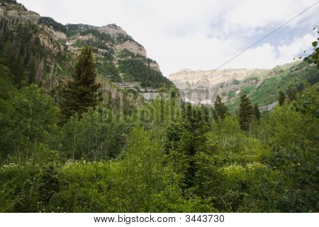 Mountains And Trees Of Northern Utah