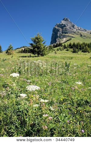 Alps Spirit