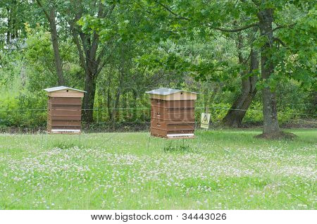 Beekeeping In Green Park