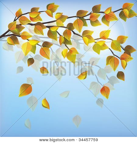 Autumn Tree, Nature Background