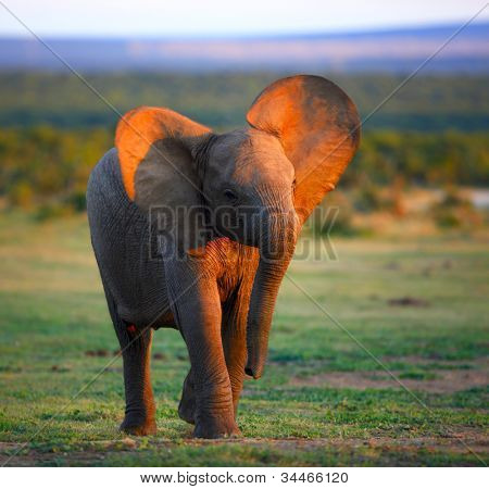 Baby Elephant (Motion Blur due to slow shutter -  eye part of face in focus)