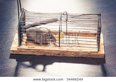 mice caught by the cage mousetrap