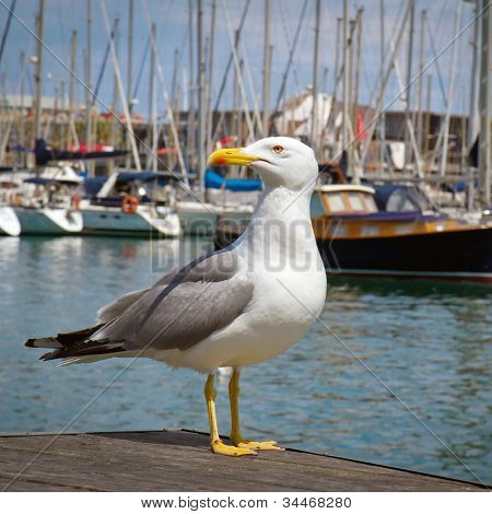 Proud seagull in port on yachts background