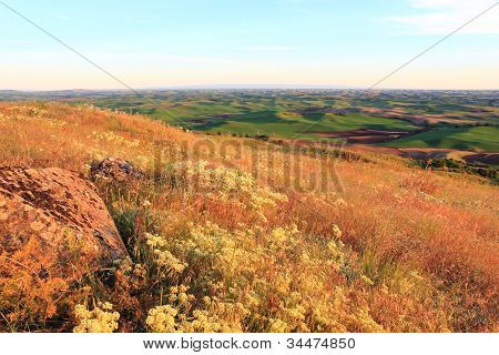 Hills Of Palouse With Wild Flowers