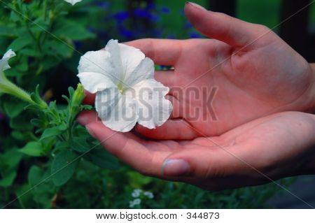The Gardener's Hands