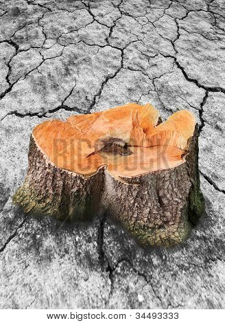 tree stump and broken dry soil