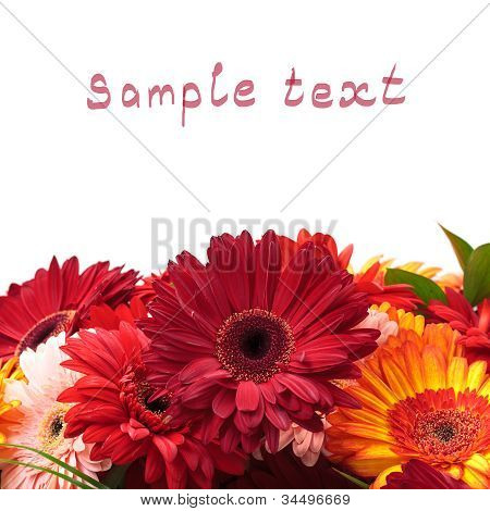 Vibrant Colorful Daisy Gerbera Flowers