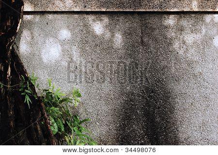 Seixo Washout acabamento cal parede com fundo de planta árvore