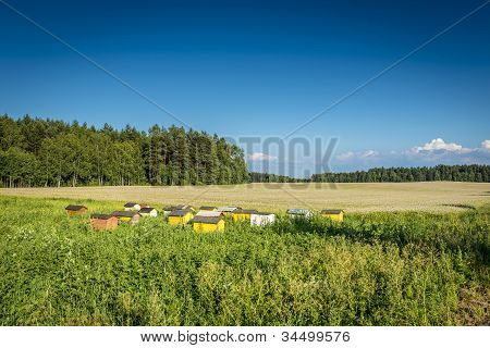 Beehives On Ecological Field