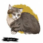 Munchkin Cat Or Sausage Cat Breed Characterized By Short Legs. Adolescent Munchkin Kitten Domesticat poster