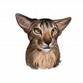 Oriental Shorthair Cat Portrait Isolated On White. Digital Art Illustration Home Pet Portrait, Pussy poster
