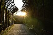 Sunbeam Spreading Light At Garden On Ba Na Hills On Vietnam poster