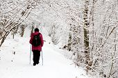 Nordic Walking In Winter, Woman With Backpack And Sticks In The Park During Snowfall. Cold Weather,  poster