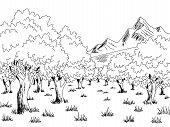 Olive Grove Graphic Black White Landscape Sketch Illustration Vector poster