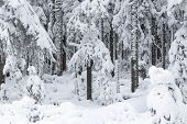 Snowy Road In The Wild Forest. Fairy Winter Forest Snowy Taiga Beautiful Nature Of Russia. Taiga For poster