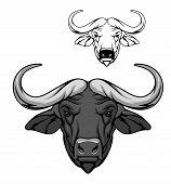 Buffalo Head Vector Cartoon Mascot, African Savanna Animal. Wild Ox, Carabao Or Bison Bull With Fuse poster