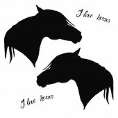 Monochrome Isolated Image Of The Silhouettes Of The Heads Of Two Black Thoroughbred Arab Stallions A poster
