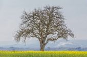 Climate Change Scene Of Winter Tree In Spring Summer Landscape. Global Warming Weather With Single B poster