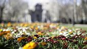 Flowers In The Foreground With Unfocused Background poster