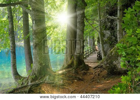Forest Landscape With Turquoise Water And The Sun