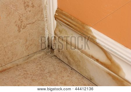 house mold problem