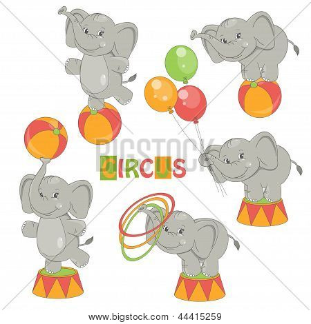 Collection of cute circus elephant