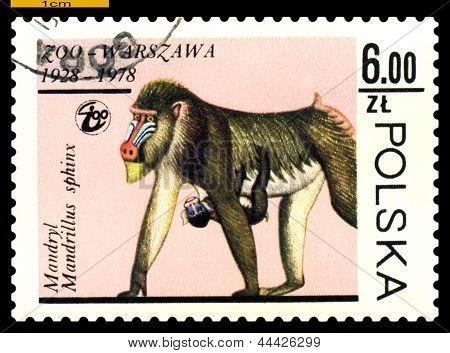 Vintage Briefmarke. Mandrills.