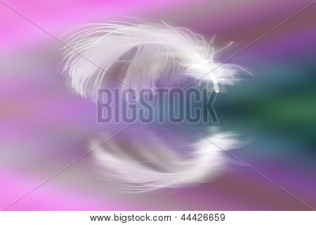 White Feather On Colorful Page With Reflection