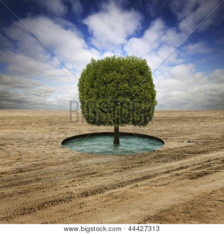 lonely tree on the desert