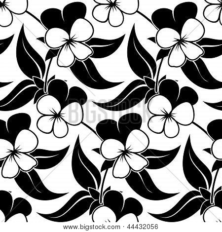 pansy floral black isolated seamless background