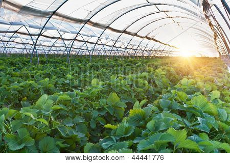 Greenhousehttp://www.bigstockphoto.com/ru/account/uploads/contribute?edit=44441776#categories