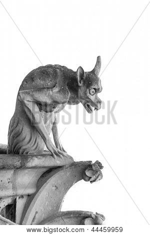 gargoyle of Notre Dame, Paris Isolated  on white background