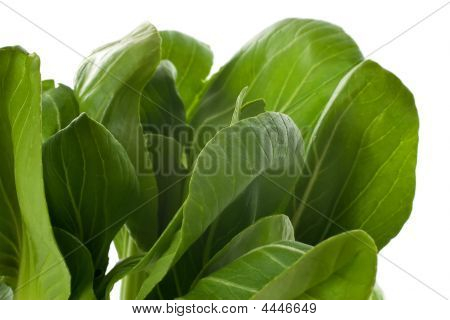 Baby Bok Choy Leaves