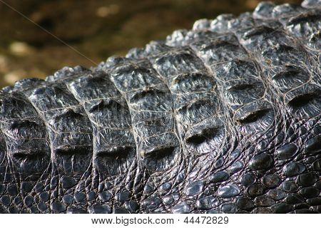 alligator hide
