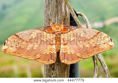 Moth night butterfly in nationalpark in thailand