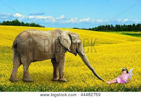Elephant With Fairy