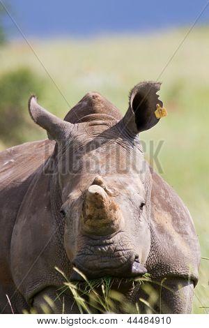 Rhino Standing In Nature