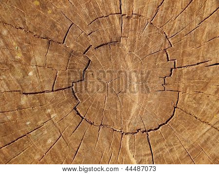 Cut of a tree