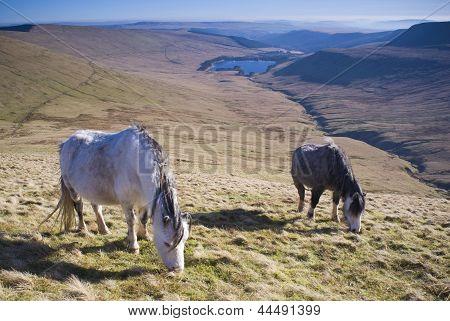 Wild Horses And Mountain Scenic.