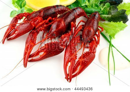 Three Red Crayfish With Salad On White Background