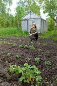 pic of couch potato  - The young woman couch a bed with the first sprouts of potato on a summer cottage - JPG