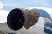 foto of swarm  - Honeybees swarm a jet airplane engine at Scottsdale Airport - JPG