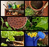 Gardening collage includes still life of gardening supplies, watering cans with flowers, lettuce pla