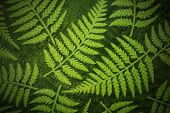 Fern Paper Background