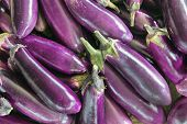 foto of brinjal  - Eggplant Brinjal Vegetable in Market Closeup Background - JPG
