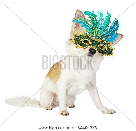 Chihuahua dog with bright carnival mask