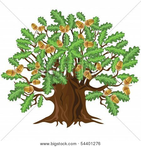 Oak Tree With Acorns, Vector Illustration