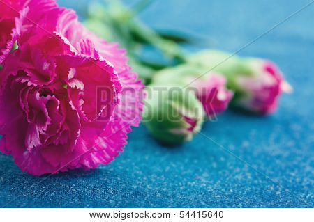 Flowers In A Metal Can On Demin Blue Background