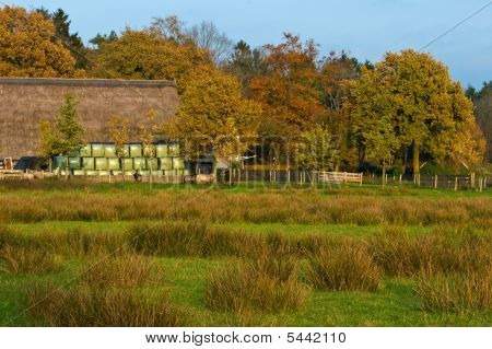 Landscape Of A Farmland With Colorful Autumn Trees